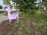Παιδικός αρωματικός κήπος