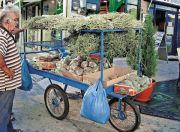 Υπαίθριος πωλητής αρωματικών φυτών στην πόλη της Χίου (Φωτ. Α. Στεφανάκη)