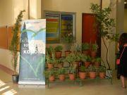 Η Φιλοδασική μερίμνησε για την διακόσμηση της εισόδου στο χώρο του Συνεδρίου με αρωματικά φυτά και όμορφα δέντρα.