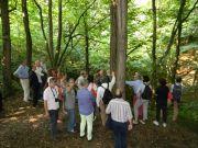 Το δάσος των «νάνων» του Parco delle Groane
