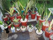 Πολλά είδη απορροφούν τις τοξικές ουσίες με τα «στόματα» που υπάρχουν στα φύλλα τους